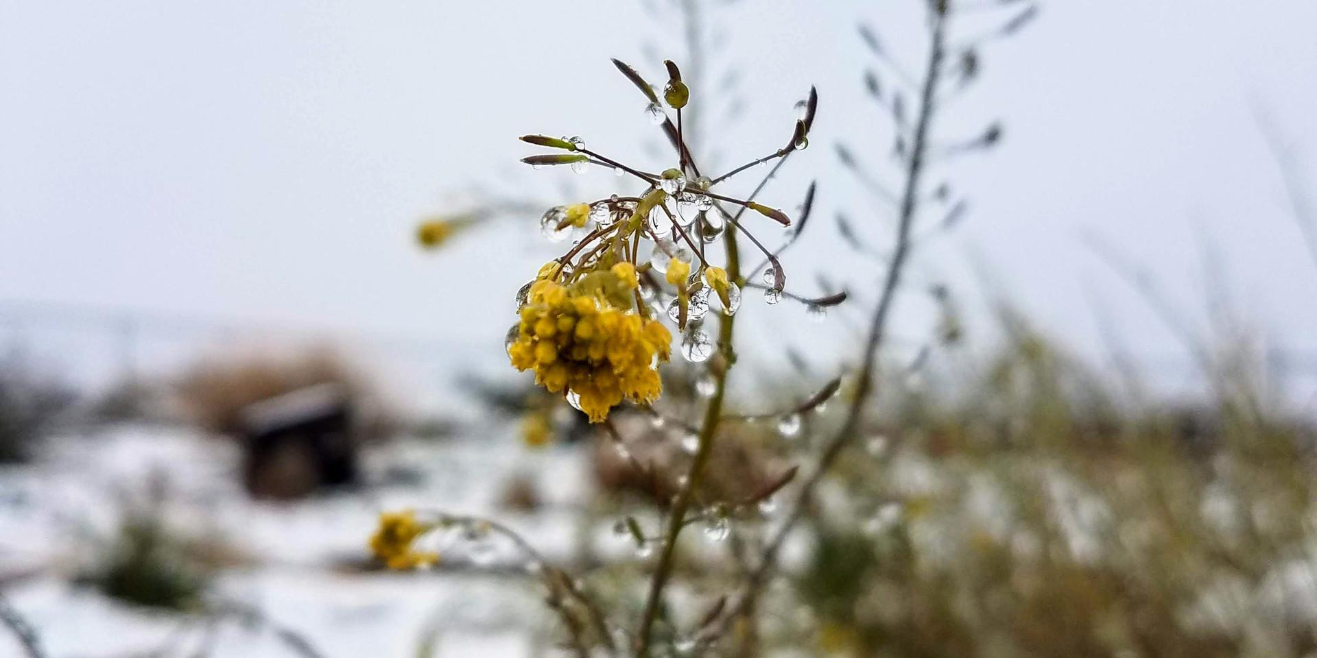 Snow day, 29 Palms, CA