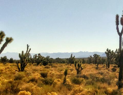 Mojave Preserve