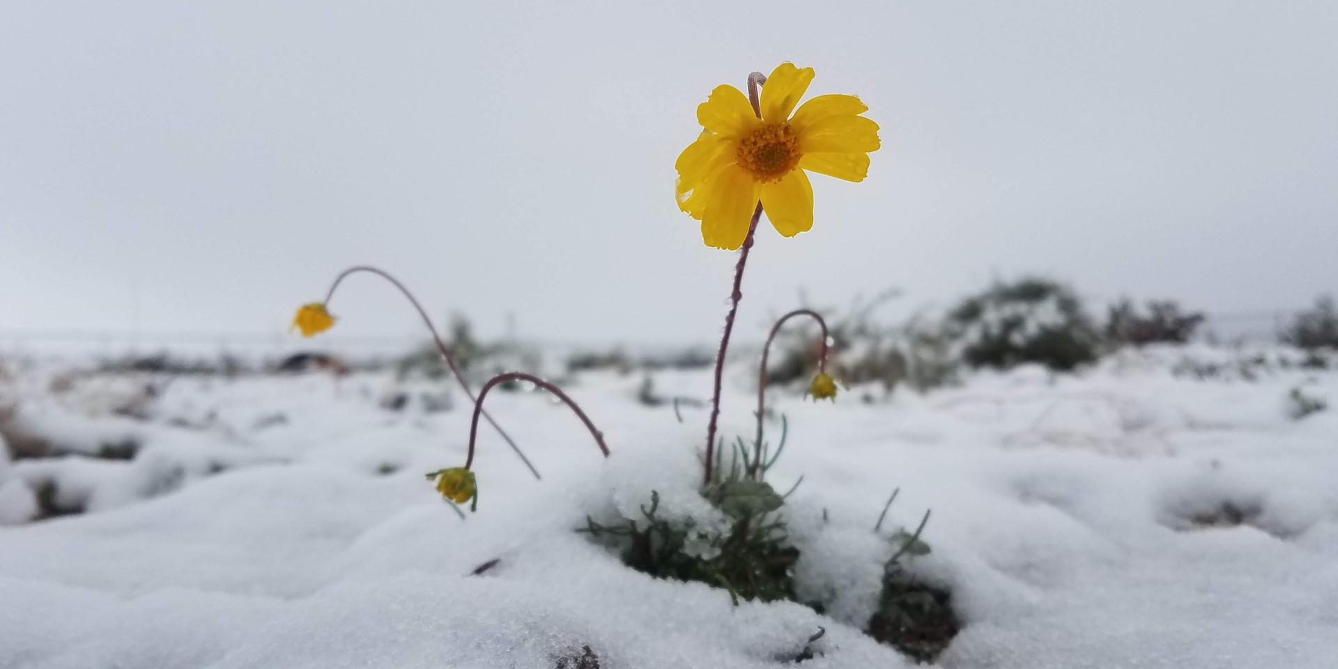Snow day 29 Palms, CA