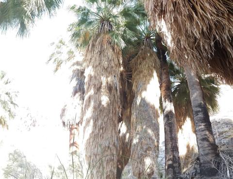 49 Palms Joshua Tree National Park