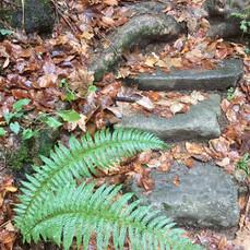 Wandern und Meditieren auf der Rigi