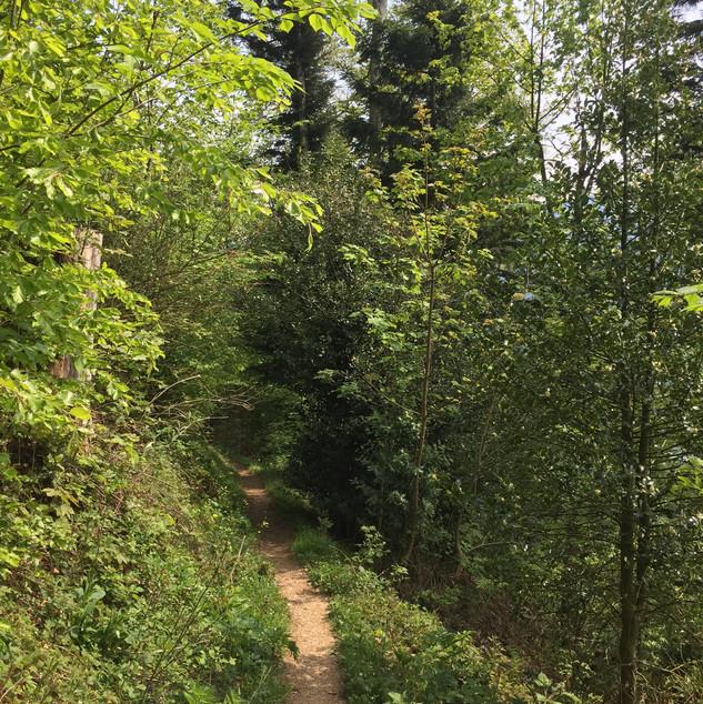 Meditatives Frühlingswandern Rossberg