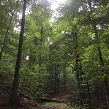 Meditatives Herbstwandern Sihlwald