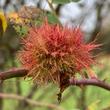 Meditatives Herbstwandern Reussebene