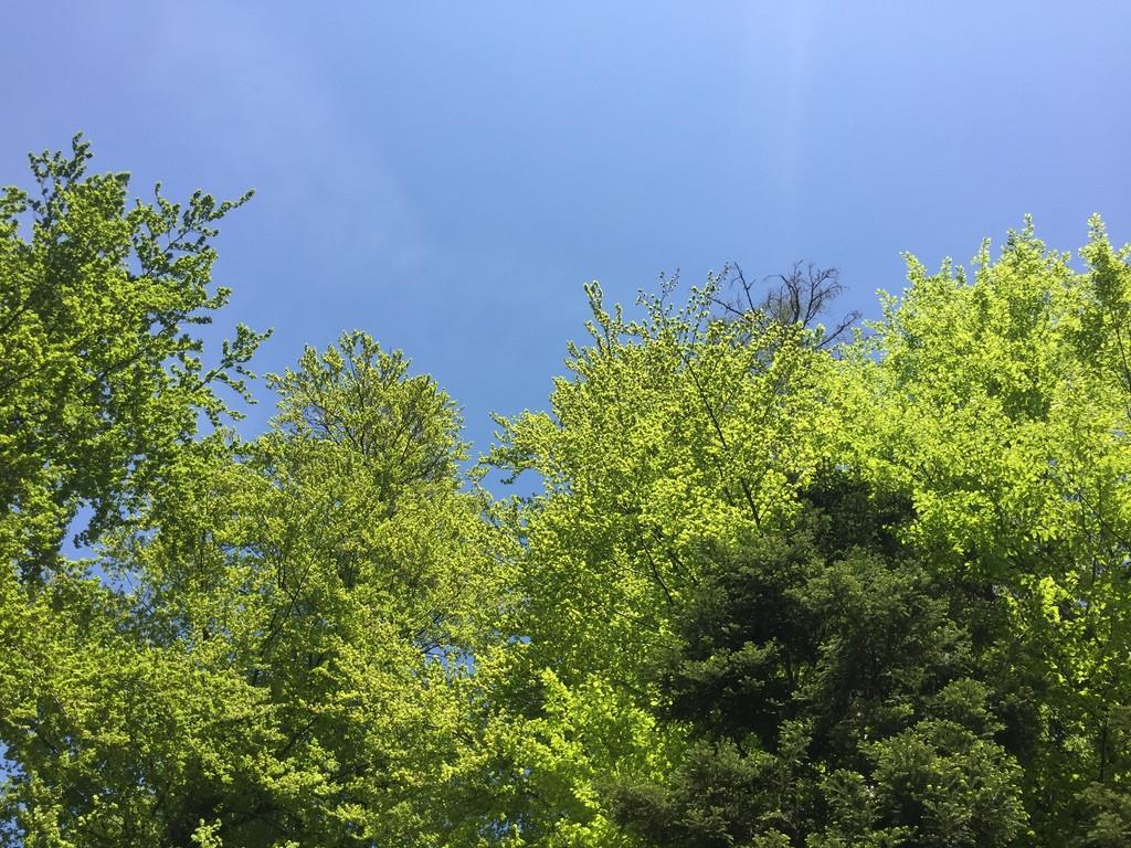 Meditatives Sommerwandern Meggerwald