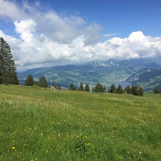 Meditatives Sommerwandern Rigi