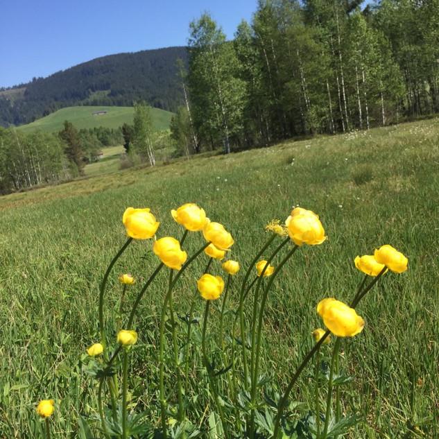 Meditatives Frühlingswandern Höhronen