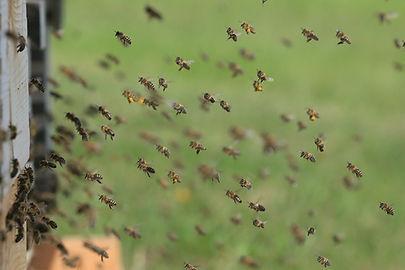 beehive_flying.jpg