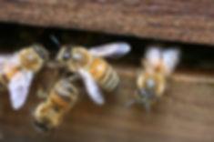 Honey Bee Beehive