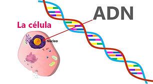 Epigenética_4.jpg