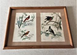 Oiseaux rares