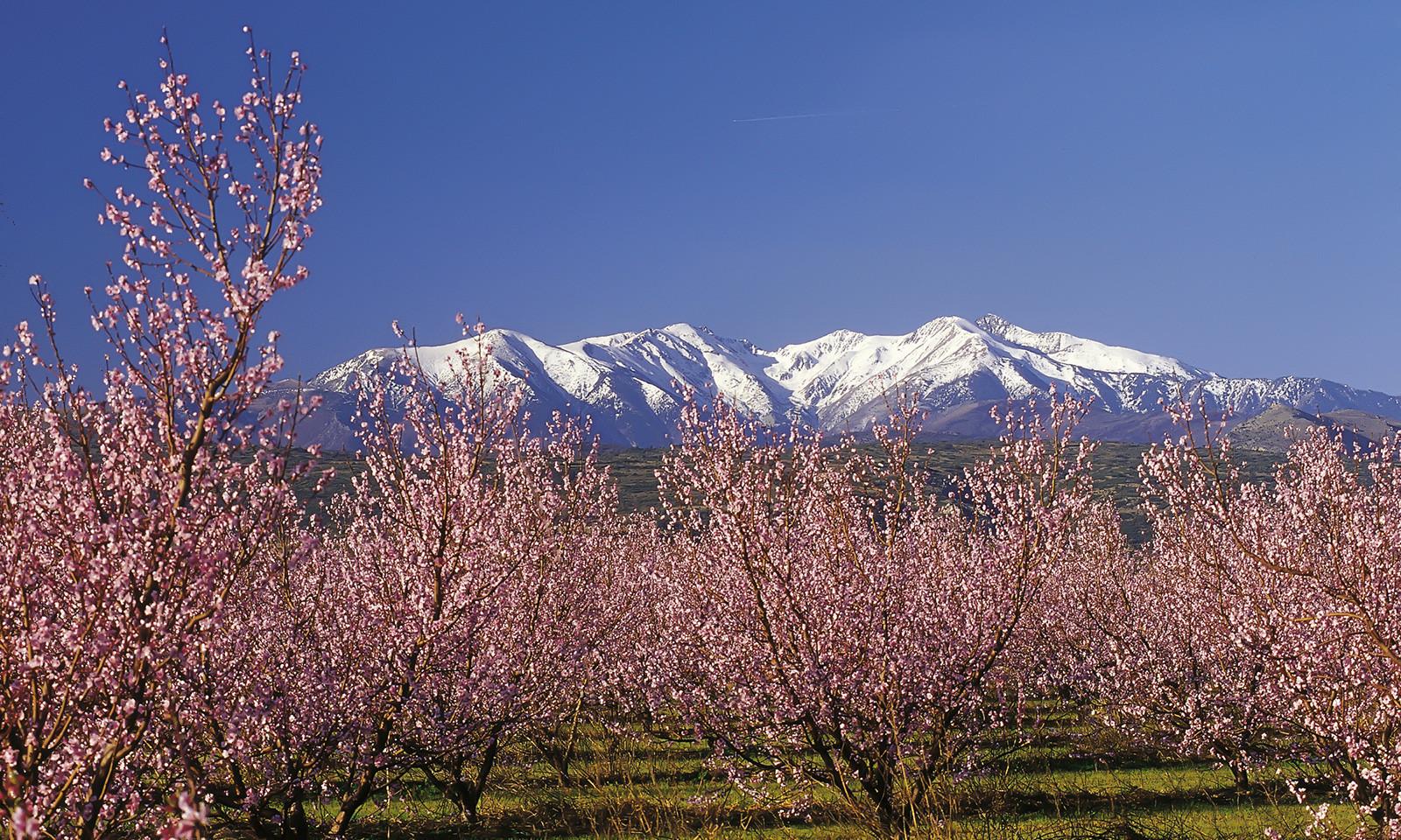 Mont Canigou.jpg