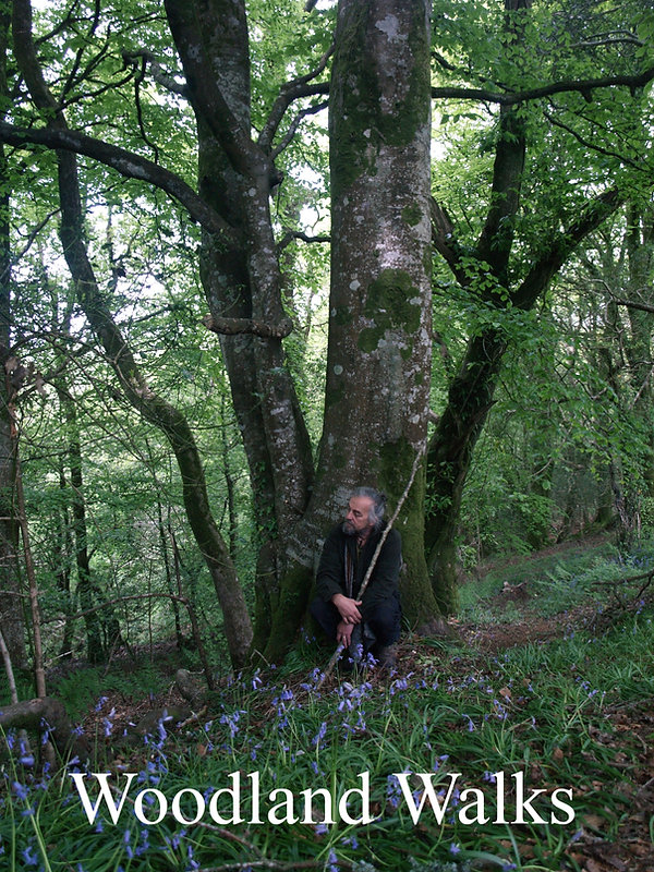 woodland walks copy.jpg