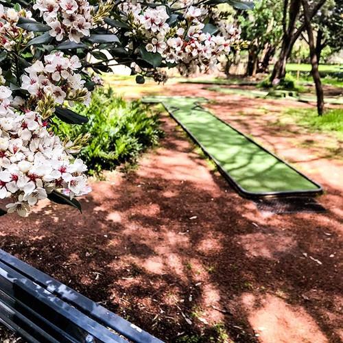 The #minigolf garden is in bloom 🌸 ❤️ ?