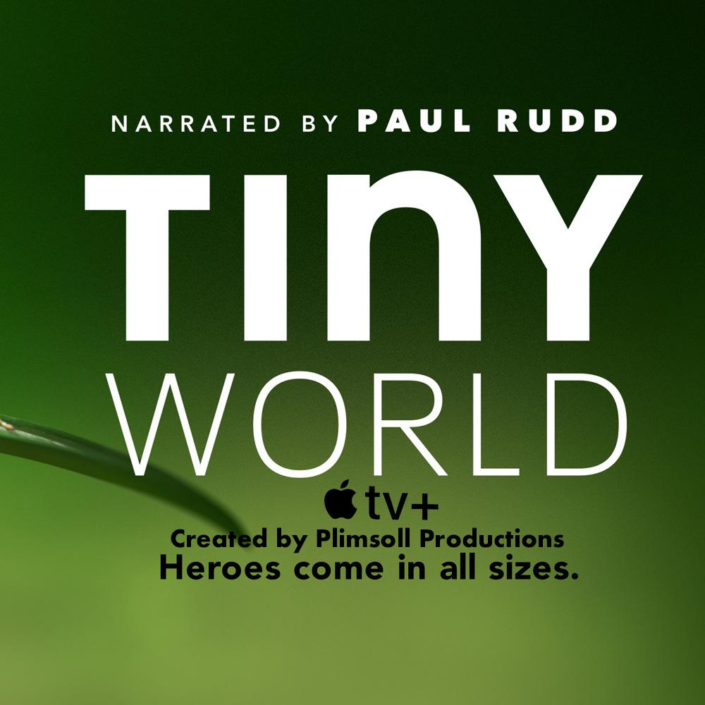 Final Tiny world