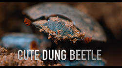 Cute dung beetle title 2