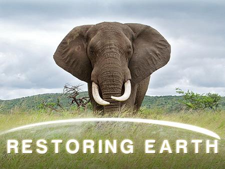 Restoring Earth Poster Frame