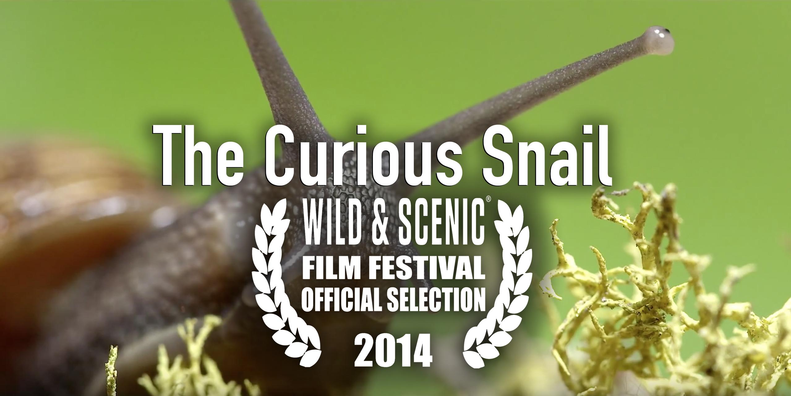 Curious Snail logo 4