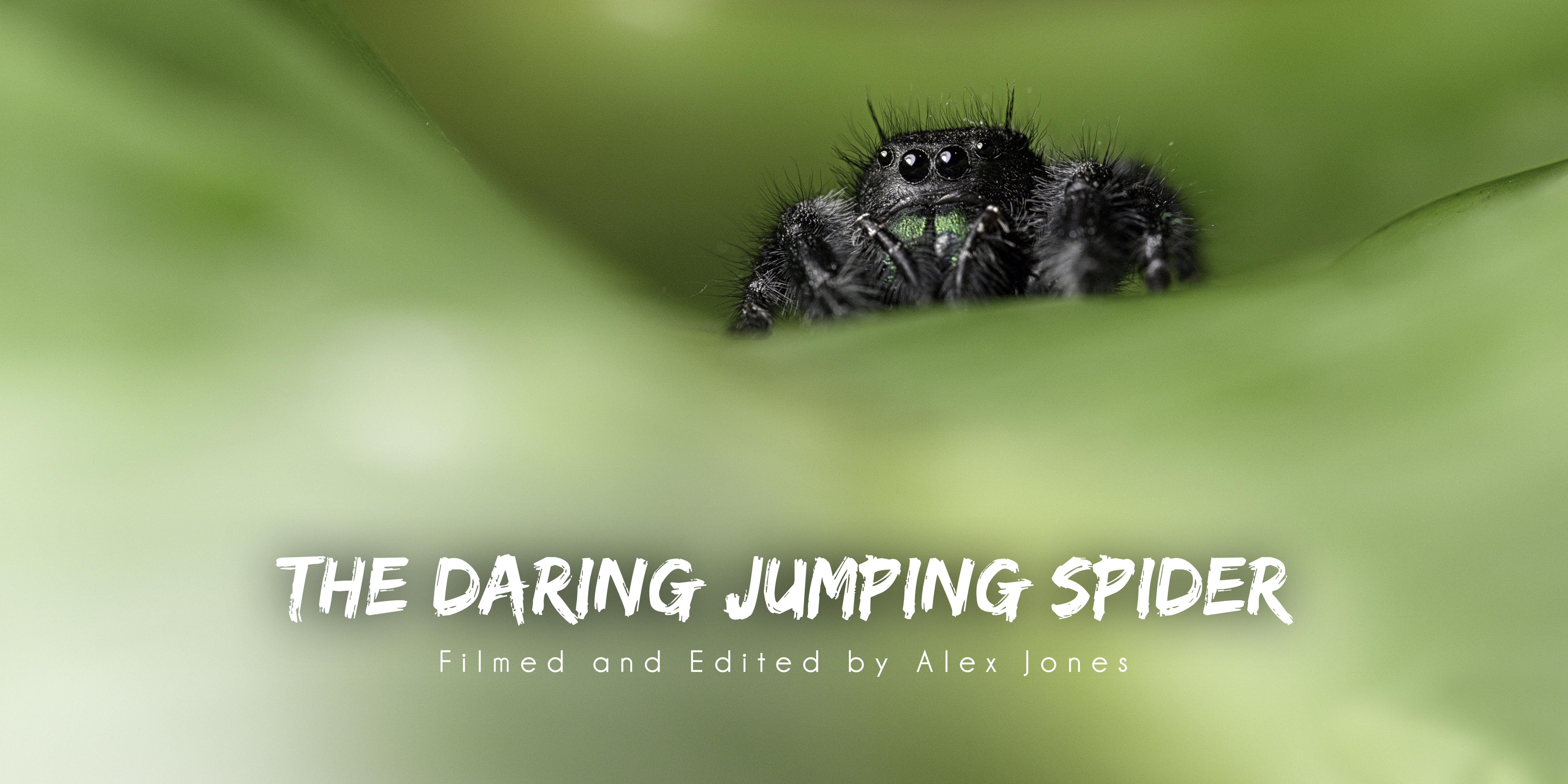 Jumping Spider Logo 4