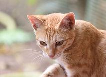 Animals FOTO II 002 Q.jpg