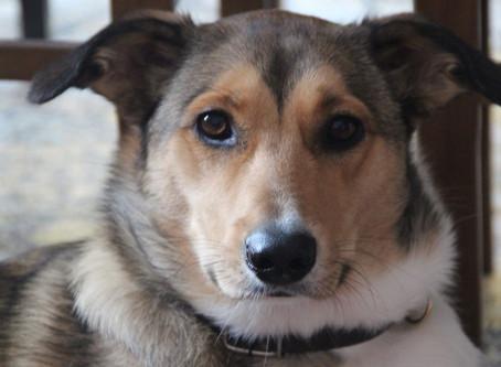 Šuniukas Lada – iš bendrabučio į namą