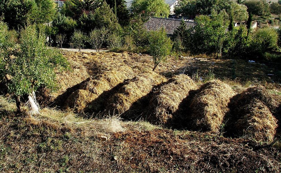 miglioramento suolo orto salaci 2014-004
