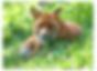 snip_20200514115228.png