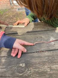 Regenwürmer erfühlen und messen