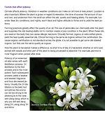 Aroma 101 page.jpg
