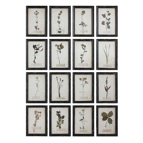 Wood Framed Vintage Reproduction Floral Art S/16