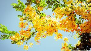 imagesflowers