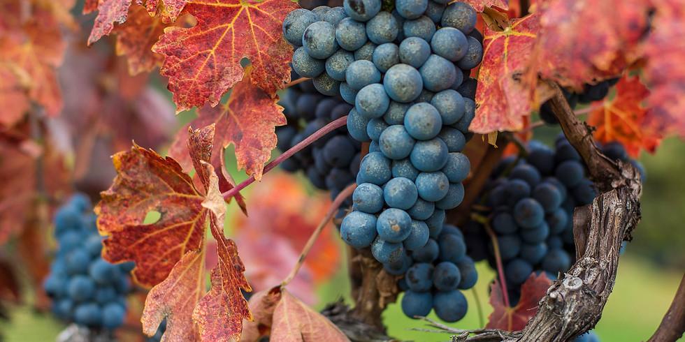 Red Wine Fermentation Tour & Tasting