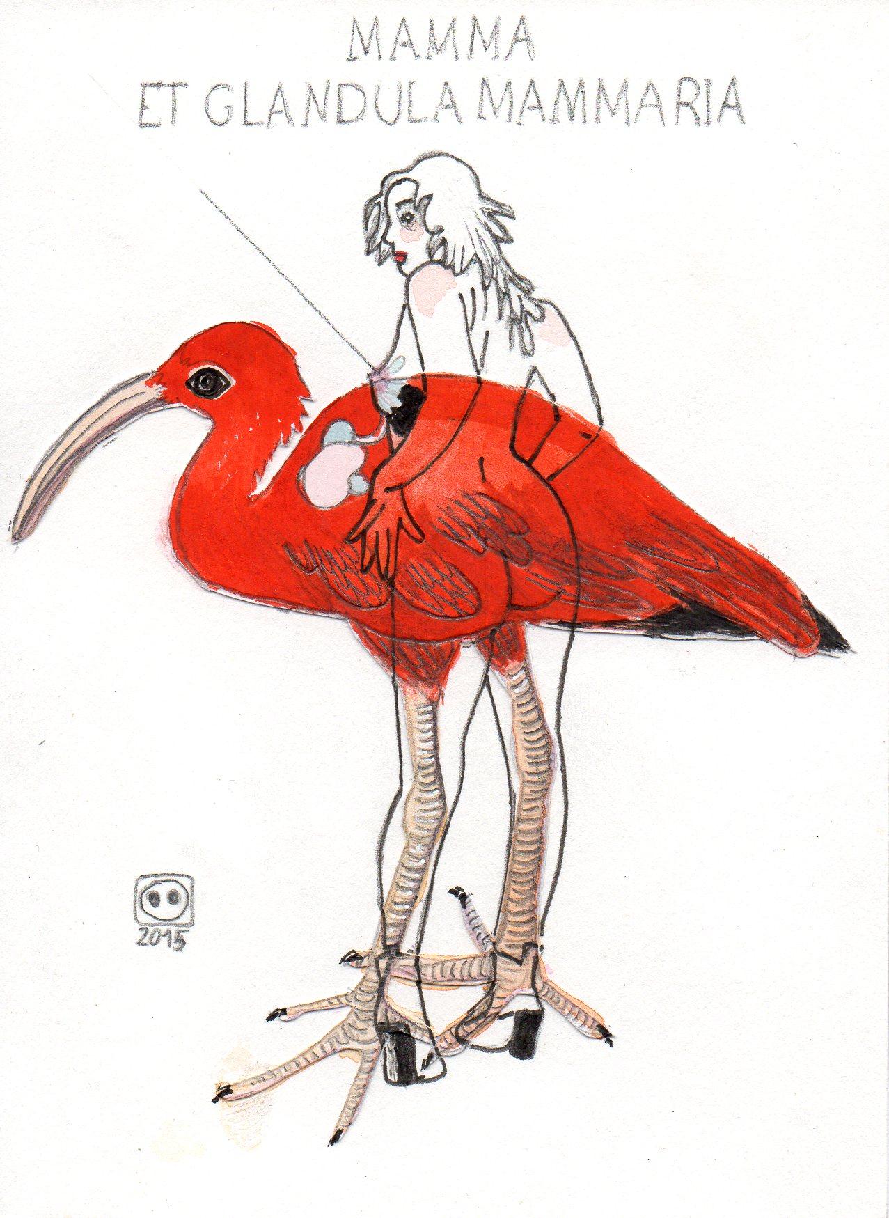F.S. n°54 (ibis)