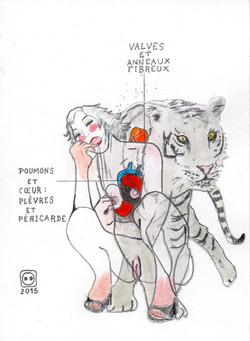 F.S. n°59 (tigresse)