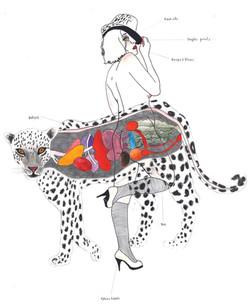 F. S. n°48 (tigresse)