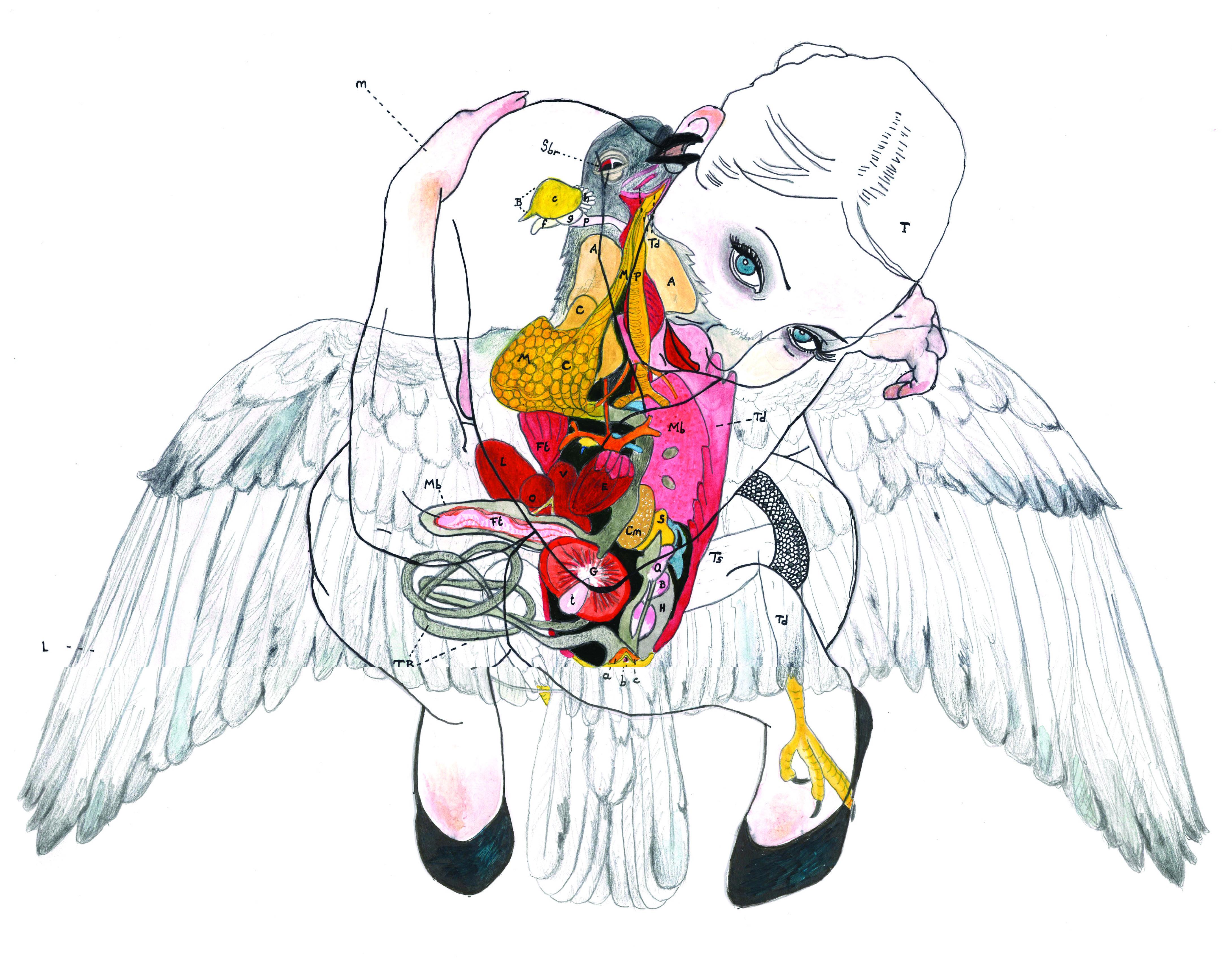F.S. n°45 (colombe)