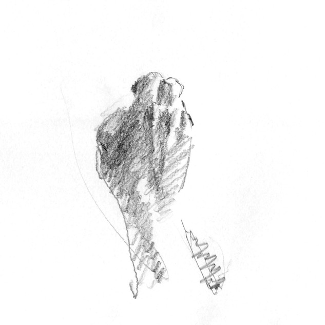 Drawing Animation