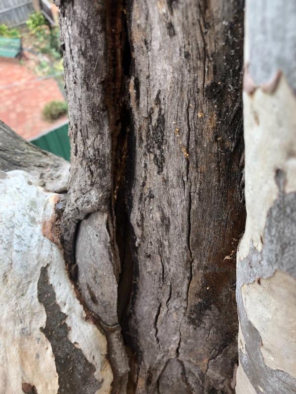 tree safety