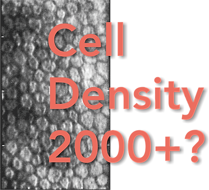 Cell-Density-2000-.png