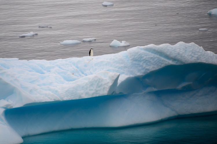 Pinguino solitario su lastra di ghiaccio