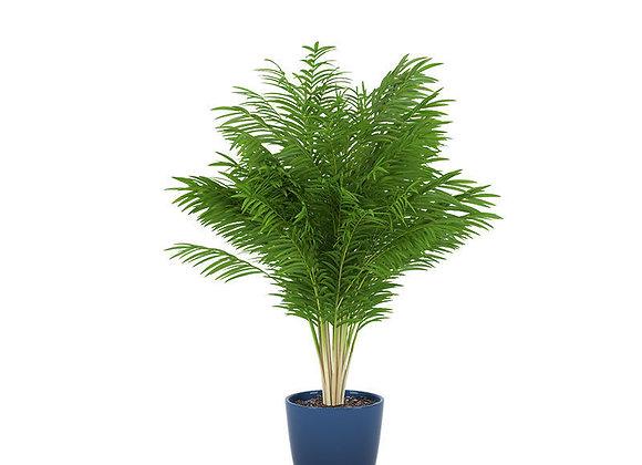 Plant 05  | 3dmodel