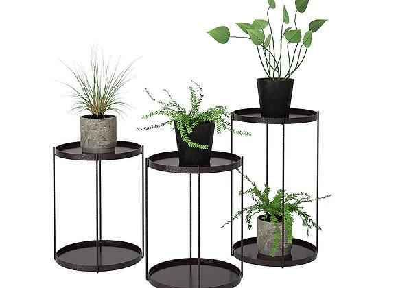 Plant 02    3dmodel