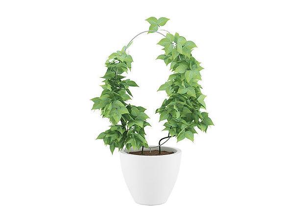 Plant 08  | 3dmodel