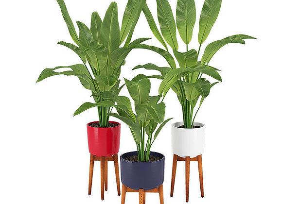 Plant 13  | 3dmodel