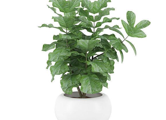 Plant 04  | 3dmodel