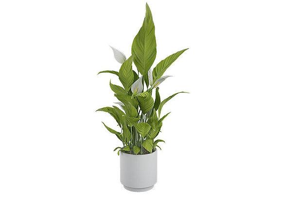 Plant 07  | 3dmodel