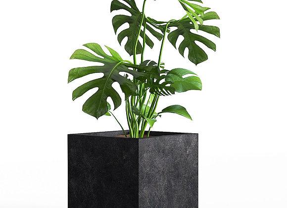 Plant 03  | 3dmodel