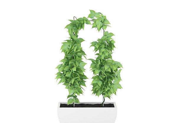 Plant 12  | 3dmodel