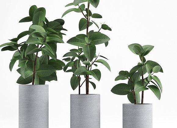 Plant 06  | 3dmodel