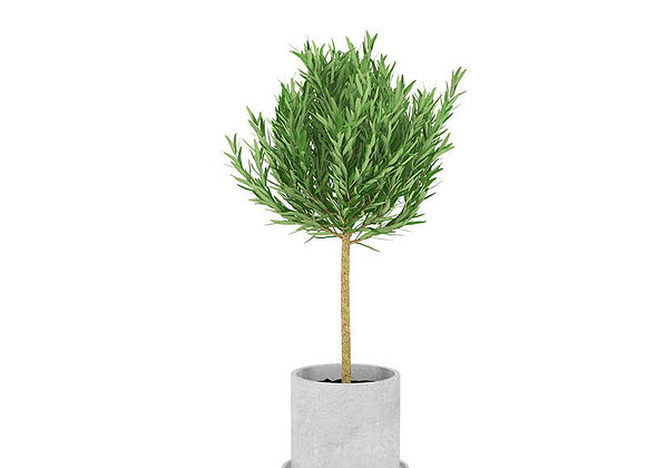 Plant 15  | 3dmodel